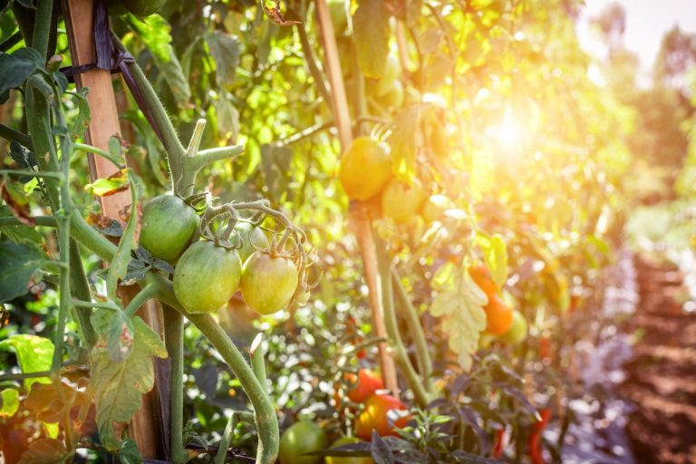 Disadvantages of organic food feature