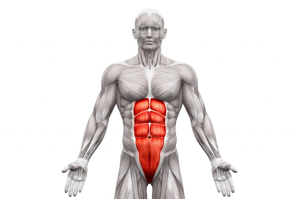 abdominal muscle
