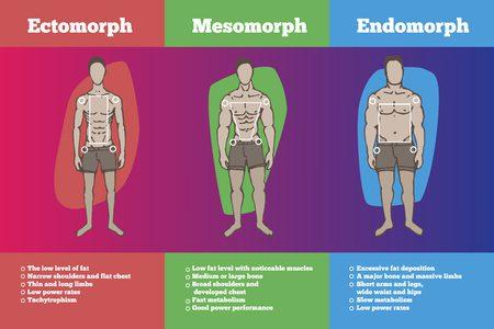 3 Metabolic types